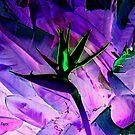 Bird of Paradise Altered by Dana Roper
