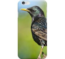 European Starling in a Tree iPhone Case/Skin