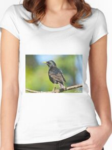 European Starling in a Tree Women's Fitted Scoop T-Shirt