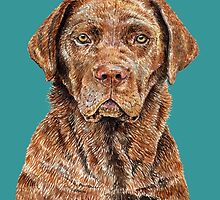 Chocolate Labrador Retriever by didielicious