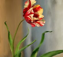 Red And Yellow Parrot Tulip by Lois  Bryan