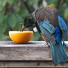 Tui..........a welcome visitor.......! by Roy  Massicks