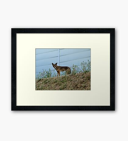 The wild side of the fence Framed Print