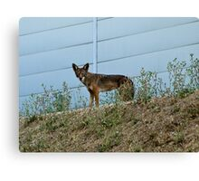 The wild side of the fence Canvas Print