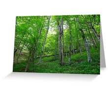 Plitvice Lakes National Park 03 Greeting Card