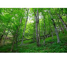 Plitvice Lakes National Park 03 Photographic Print