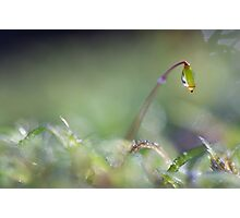 Sparkling moss in the forest Photographic Print