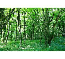 Plitvice Lakes National Park 05 Photographic Print
