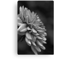 Dahlia's Wishes  Canvas Print