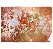 Red Leaves and Gum Trees Poster