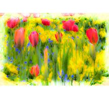 Pastel Summer Flowers  Photographic Print