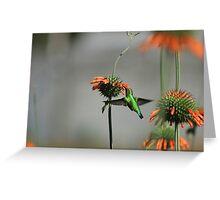 Blue Tailed Emerald Hummingbird Greeting Card