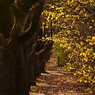 Hahndorf Path by Trudi Skinn