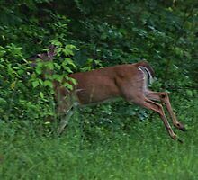 Leaping Deer by Rick  Friedle