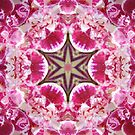 Orchid Star by Shawna Rowe