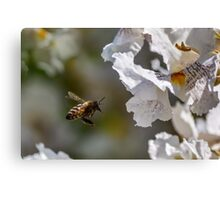 Bee In The Flight Canvas Print