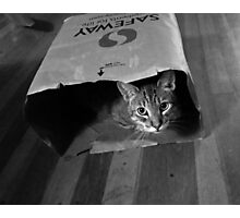Cleo in a Bag Photographic Print