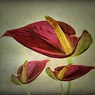 Red Exotic Flower by CarolM