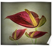 Red Exotic Flower Poster