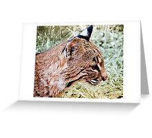 Bobcat With Stealthy Eye Greeting Card