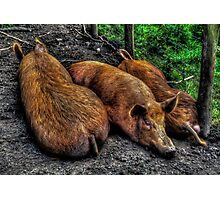 Snout To Tail Photographic Print