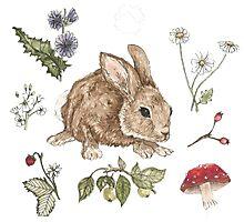 Woodlant Rabbit  Photographic Print