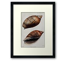 Proceedings of the Zoological Society of London 1848 - 1860 V5 Mollusca 048 Framed Print