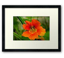 last autumn flower Framed Print