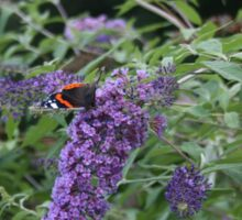 Red Admiral butterfly on rose bay willow herb Sticker