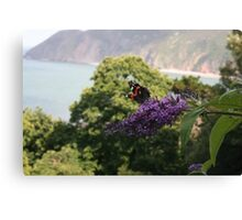 Red admiral on rose bay willow herb, backdrop of Exmoor coastline. Canvas Print