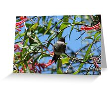 Hummingbird And Red Honeysuckle Greeting Card