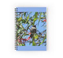 Hummingbird And Red Honeysuckle Spiral Notebook