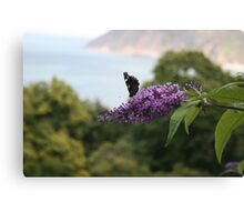 Red admiral on rose bay willow herb, Exmoor backdrop Canvas Print