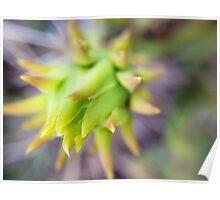 Purple Cactus Poster