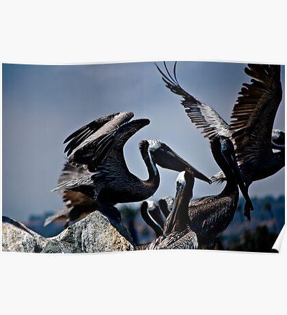 Pelicans in Flight Poster