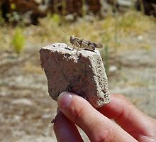 Cicada on archaeological site in Crete by Grace Johnson