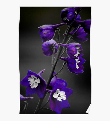 Purple Poster