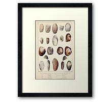 Proceedings of the Zoological Society of London 1848 - 1860 V5 Mollusca 018 Framed Print