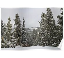 Colorado Mountains, Trees, and Snow Poster