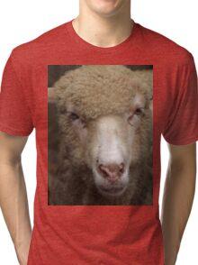 Merino Sheep Tri-blend T-Shirt