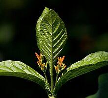 Tripzoid Plant by Adam Bykowski