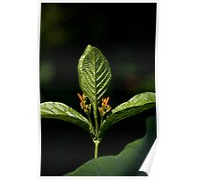 Trizoid Plant Poster