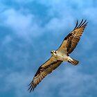 Osprey Shot by Patrick Kavanagh