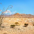 Dead Sticks Bloom in the Desert by Owed To Nature