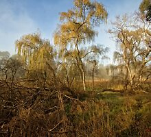 Frosty and Foggy Morning at Macgregor Nature Reserve (ACT/Australia) (13) by Wolf Sverak