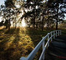 Frosty and Foggy Morning at Macgregor Nature Reserve (ACT/Australia) (16) by Wolf Sverak