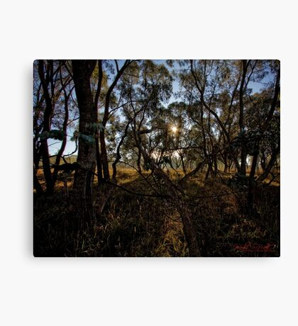 Frosty and Foggy Morning at Macgregor Nature Reserve (ACT/Australia) (17) Canvas Print