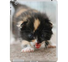 3 week old tortoiseshell iPad Case/Skin