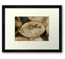 Snail on Honesty Seed Pod Framed Print