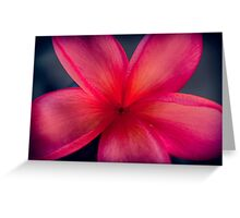 Frangipani 1 Greeting Card